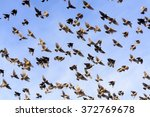 Flock Of Red Winged Yellow...