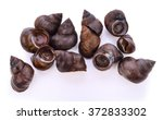 Periwinkles On White Background