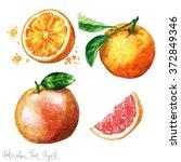 watercolor food clipart  ... | Shutterstock . vector #372849346