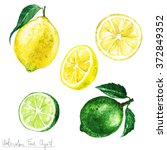 Watercolor Food Clipart   Lemo...