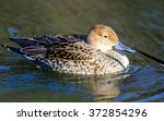 female northern pintail  anas... | Shutterstock . vector #372854296