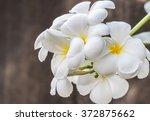 bouquet of white frangipani ... | Shutterstock . vector #372875662