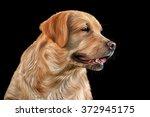 Drawing Dog Golden Retriever...