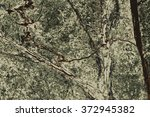 the texture of natural stone ... | Shutterstock .eps vector #372945382