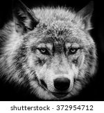 wolf eyes. black and white head ... | Shutterstock . vector #372954712