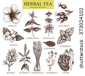 botanical collection of hand... | Shutterstock . vector #373024102