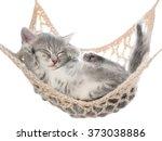 Stock photo cute striated kitten sleeping in hammock on a white background 373038886