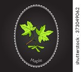 Maple Branch With Leaves And...