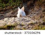 Cute White Little Rabbit...
