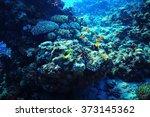 coral reef underwater photo | Shutterstock . vector #373145362