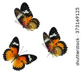 Stock photo set of the most beautiful butterfly leopard lacewing butterfly cethosia cyane isolated on white 373169125