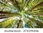 bottom view of tall old trees... | Shutterstock . vector #373194346