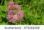 flowers | Shutterstock . vector #373266328
