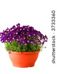 A Flower Pot Full Of Spring...