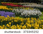 Bed Of Colorful Flowers In The...