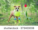 funny dog with sunglasses and... | Shutterstock . vector #373403038