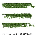 ivy leaves isolated on a white... | Shutterstock . vector #373474696