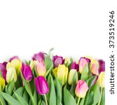 yellow and purple tulip... | Shutterstock . vector #373519246