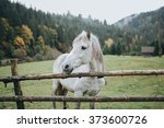 White Horse On A Mountain...
