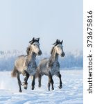 two galloping gray andalusian... | Shutterstock . vector #373675816