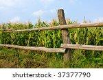 Wiew On Wooden Fence Near Corn...
