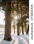 winter pines. morning sun | Shutterstock . vector #373806535