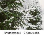fir tree   Shutterstock . vector #373806556