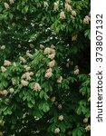spring chestnut | Shutterstock . vector #373807132