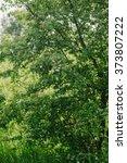spring green  tree | Shutterstock . vector #373807222