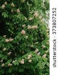 spring green tree chestnut | Shutterstock . vector #373807252