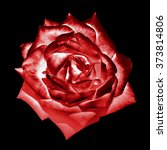 Small photo of Surreal dark chrome red tender rose flower macro isolated on black