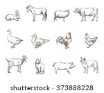 farm animals | Shutterstock . vector #373888228