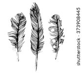 3 hand drawn feathers on white... | Shutterstock .eps vector #373908445