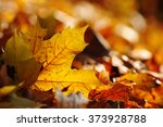 brown maple fall leaf in nature ... | Shutterstock . vector #373928788