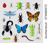 set of various insects design... | Shutterstock . vector #374080072