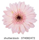 pink gerbera flower isolated on ... | Shutterstock . vector #374082472