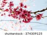 pink sakura flower blooming. | Shutterstock . vector #374309125
