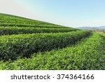 beautiful fresh green tea... | Shutterstock . vector #374364166