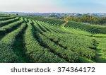 beautiful fresh green tea... | Shutterstock . vector #374364172