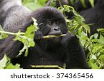 In The Virunga Park  A Small...