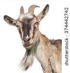 goat isolated on a white... | Shutterstock . vector #374442742