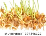 handful of wheat germs isolated ... | Shutterstock . vector #374546122
