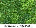 Leaf Texture. Element Of Design.