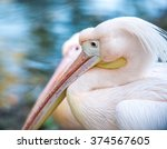 Close Up Of Pink Pelican With...