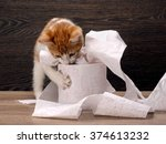 Stock photo cat and toilet paper little kitten playing with the toilet paper how to accustom the cat to the 374613232