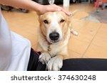 thai dog | Shutterstock . vector #374630248