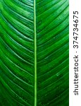 leaf texture | Shutterstock . vector #374734675