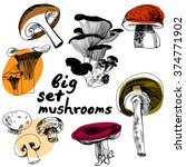 sketched edible mushrooms. big... | Shutterstock .eps vector #374771902