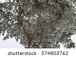 Small photo of Low-angle shot of a big pine-tree afther the snowfall, it is all covered with snow.