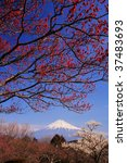 mt.fuji and japanese apricot... | Shutterstock . vector #37483693